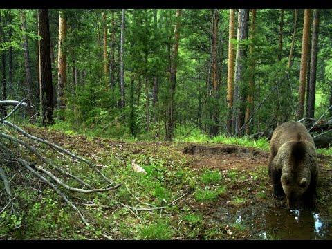 Леса  Тайги. Красивые и дикие места России.
