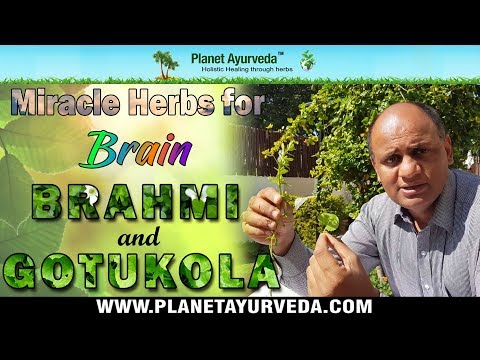Brahmi and Gotukola - Miracle herbs for Brain