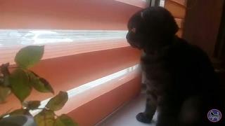 #6 Кошка смотрит в окно
