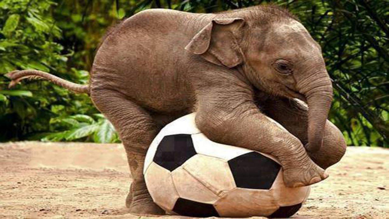 The Happiest Baby Elephants - YouTube