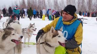 Гонки на собаках под Нижним Новгородом