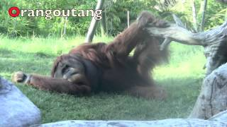 ALPHABET Animals - PHONICS for Kids - ABC Nursery Rhymes Song