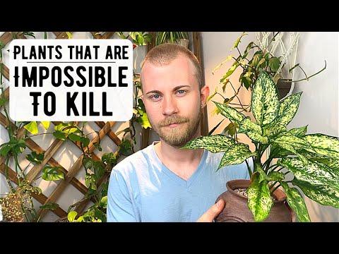 Houseplants That Are Impossible To Killиз YouTube · Длительность: 20 мин8 с