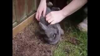 Милые кролики. Веселая видео подборка!(Милые кролики. Веселая видео подборка! http://youtu.be/pP3BdP1sA8U Мегапозитивные крольчата! http://youtu.be/0WKajtyCFcU Кролик..., 2015-02-17T13:55:14.000Z)