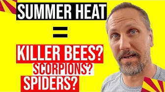 Dangerous Arizona Insects, Scorpions, Bees & Spiders to Watch Out For This Summer!