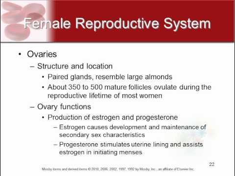 Chapter 22 - The Reproductive System