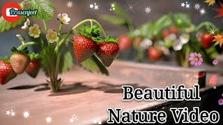 Beautiful nature n Music WhatsApp Status Video By Prasenjeet Meshram