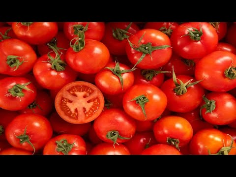What You Need To Know About Freezing Tomatoes!!