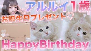 アルルイ1歳の誕生日!!!初ケーキにプレゼントに大興奮ww【兄弟猫】