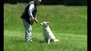 Dog Training: Amazing New Techniques. Works In Minutes Stops Pulling On The Lead