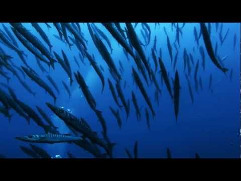 Documentary video diving in FRANCE 2011