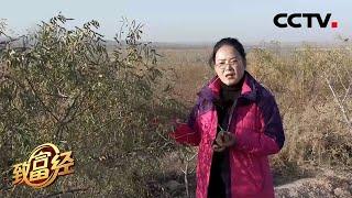 《致富经》 20201120 戈壁滩里找财富的女人| CCTV农业 - YouTube