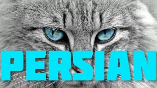 PERSIAN CAT | Personality, History, Health, Care, etc. | inPAWmation