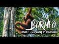 BORNÉO - ÉPISODE 2 : à la rencontre des orangs-outans… MAIS PAS QUE!