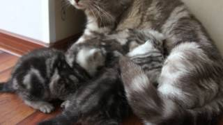Котятам 24 дня (2012-03-17)