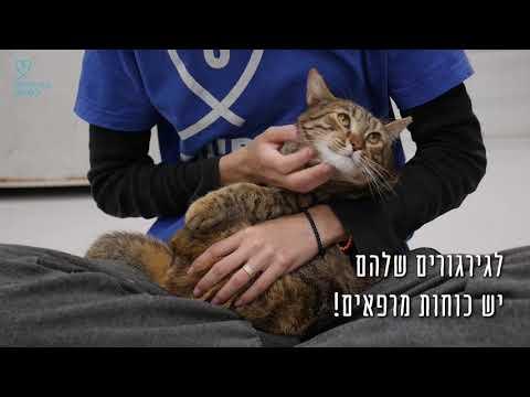 7 סיבות מצויינות לאמץ חתול