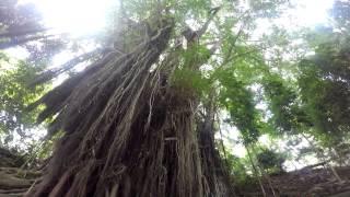 Mystical Island of SIQUIJOR Philippines