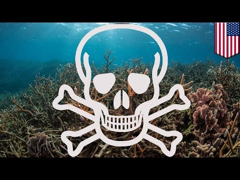 Climate change: Marine life threatened as ocean oxygen levels drop - TomoNews