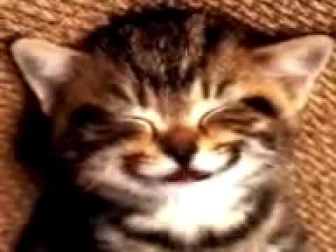 Gato cantando. Cumpleaños feliz