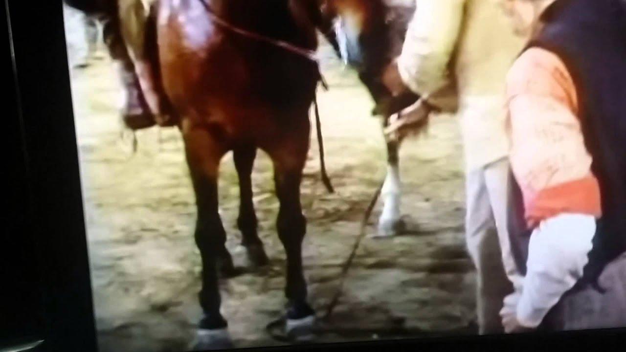 horse dick