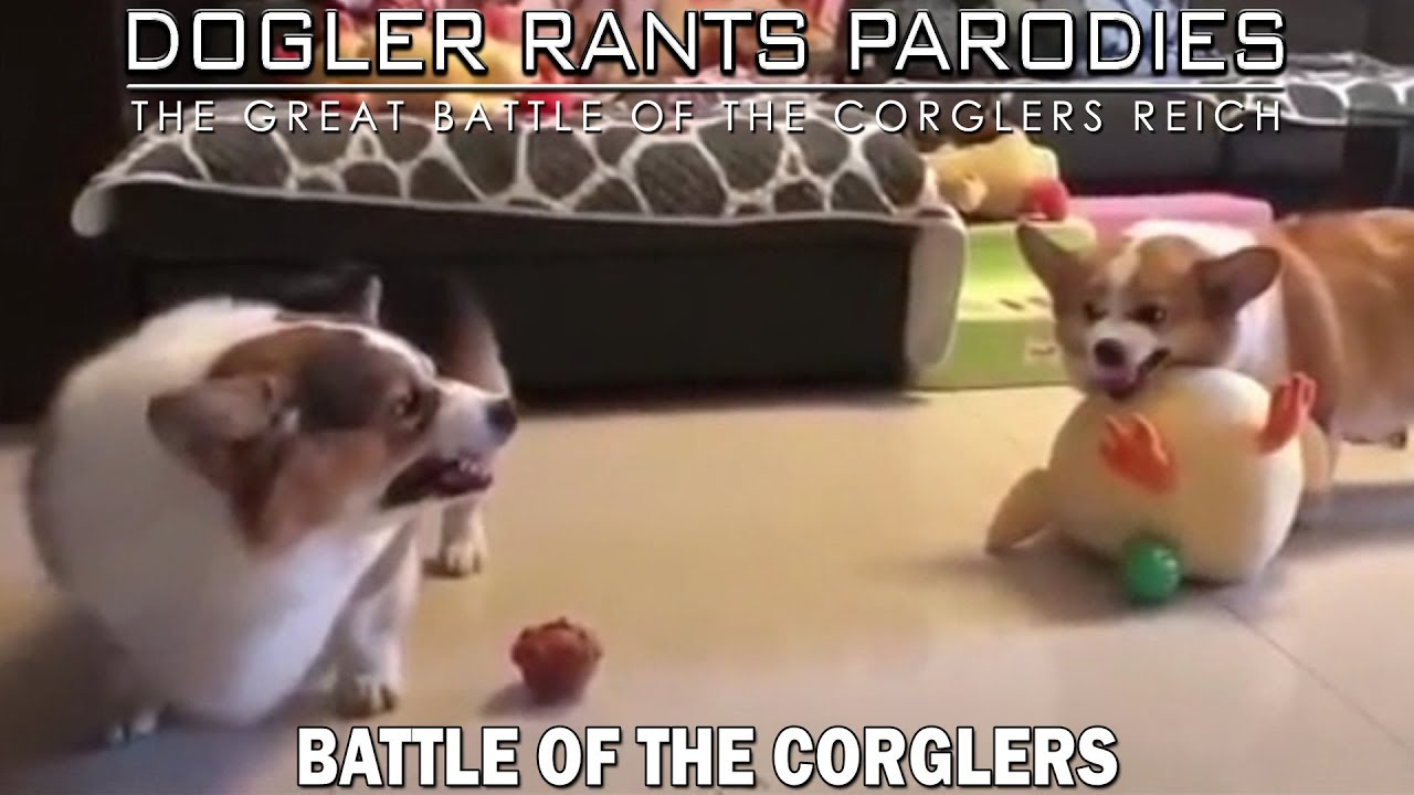 Battle of the Corglers