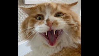 Cats Are Crazy😹-Funny And Cute Cat Videos 2021 | International Cat