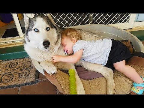 How Dog Show Affection To Baby Dog With Love   Dog love Baby
