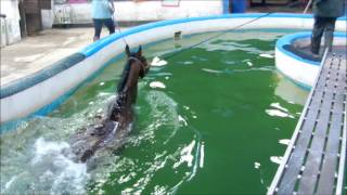Horses swimming in the pool facilities | NETC