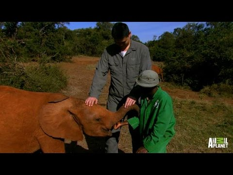 Traumatized Baby Elephants Find New Human Parents | Saving Africa's Giants with Yao Ming