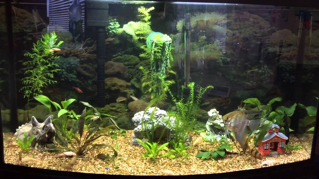 The best aquarium design 50 gallons freshwater tank for How to decorate a fish tank with household items