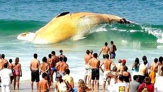 Die 10 Sonderbarsten Ozean Phänomene!
