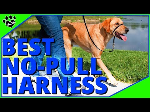 Best No Pull Dog Harness – Stop Your Dog from Pulling