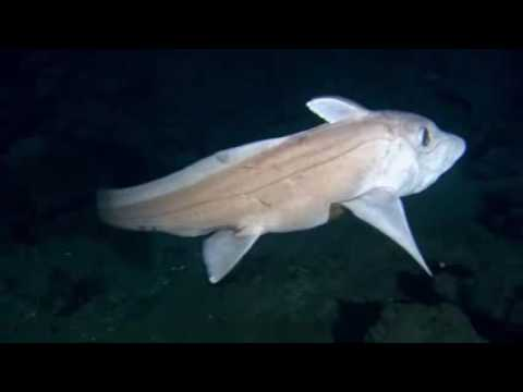 Deep Blue Sea Unseen Insects Are So Beautiful Under Ocean Ground