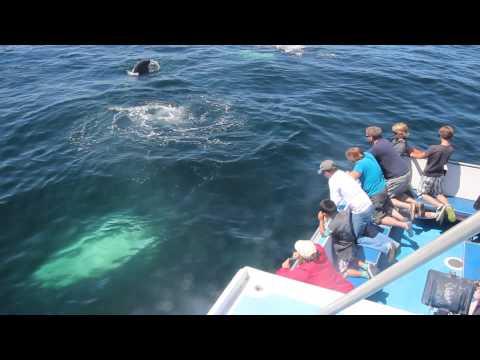 Whale watch in the Bay of Fundy Digby Neck Nova Scotia - www.novascotia.cc