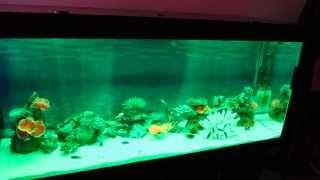 RGB LED подсветка аквариума(, 2013-05-29T17:13:09.000Z)