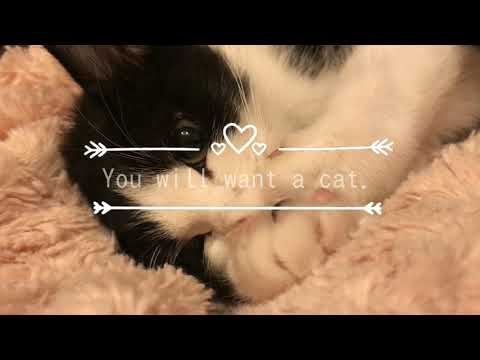 You will want a cat