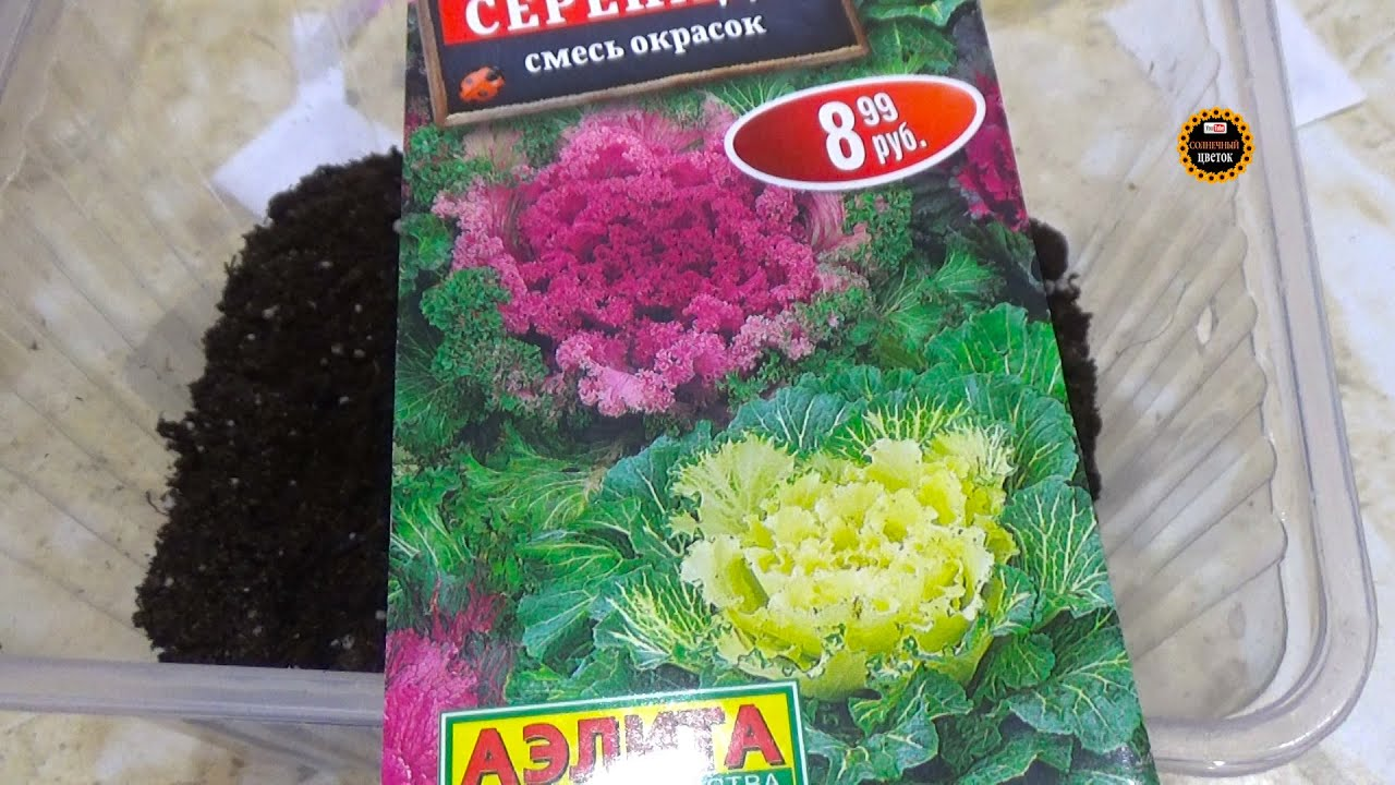 Декоративная капуста семенами на рассаду / Сад-огород ...