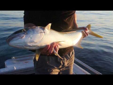 Coastal Fishing Mayhem Episode 3 - Early Morning Kings