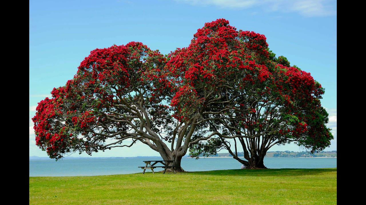 Top 10 most beautiful trees and coolest tree formations for Pictures of the coolest things in the world