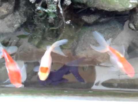 Bể cá