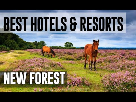 Best Hotels And Resorts In New Forest, United Kingdom UK