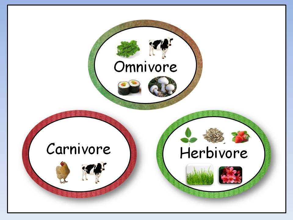 Omnivore, Carnivore, Herbivore - YouTube