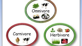 Omnivore, Carnivore, Herbivore