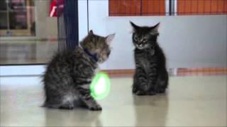 Jedi Kittens in training!
