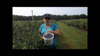 U-Pick Blueberries at Green Acres in Yulaha, FL