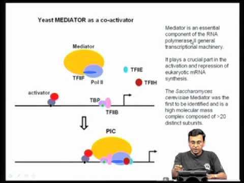 Mod-02 Lec-06 Transcription factors: transcription activation domains