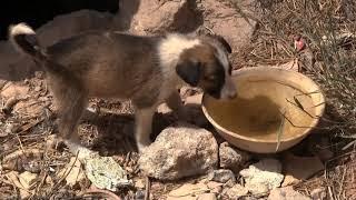 Tierszenen (2): Hundewelpen in der Medina von Safi. Musik: Unkenschnabel.