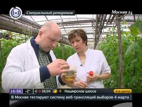 Новомосковский и Троицкий административные округа Москвы