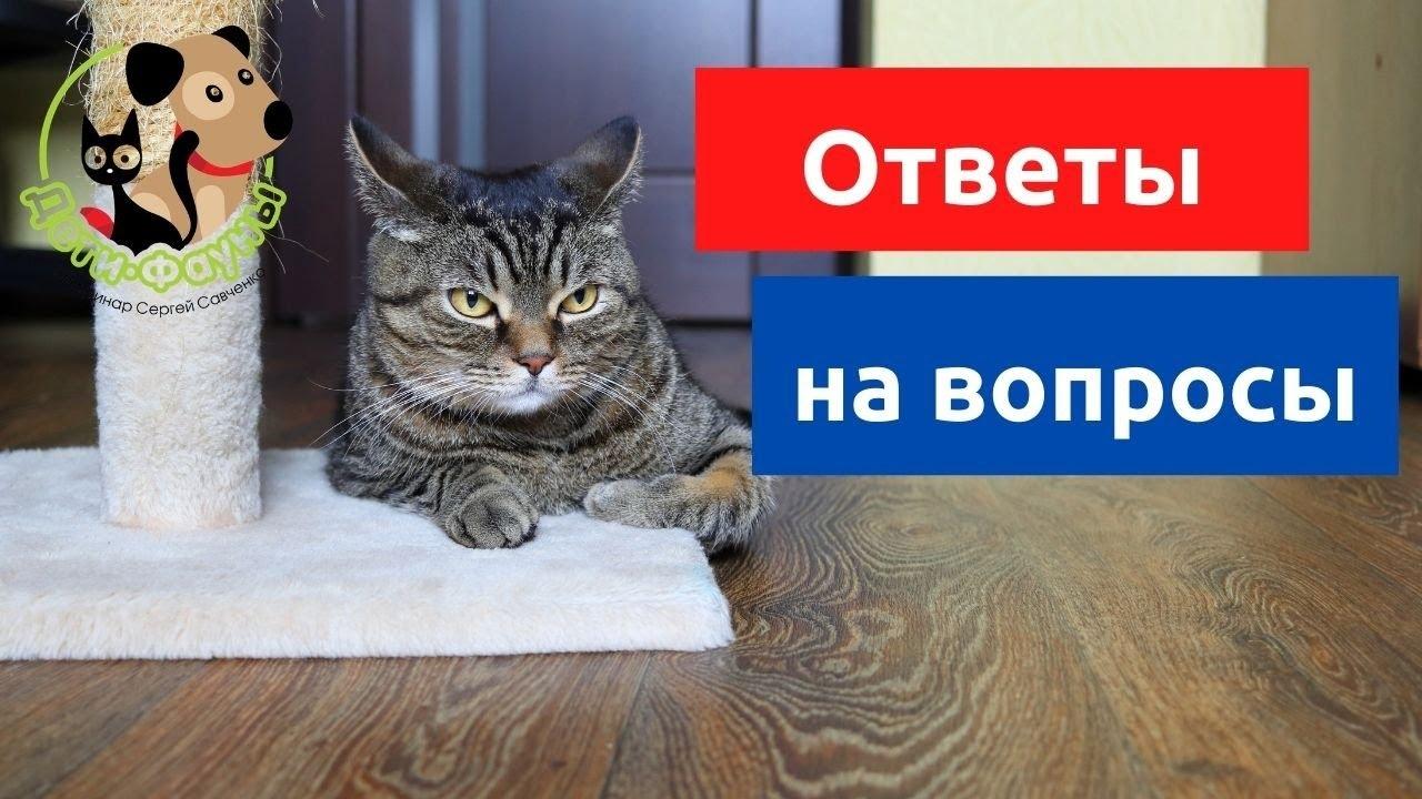27.02.21 Ветеринар Сергей и кот Сэмыч отвечают на вопросы о кошках и собаках
