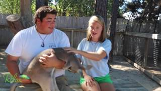 Repeat youtube video My Trip to the Alabama Gulf Coast Zoo!!! RelaxontheBeach